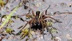 Raft spider Arne Reserve