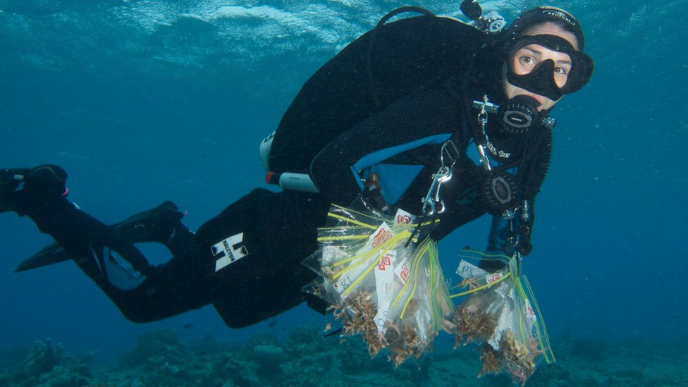 Sample bags from Catlin Seaview Survey