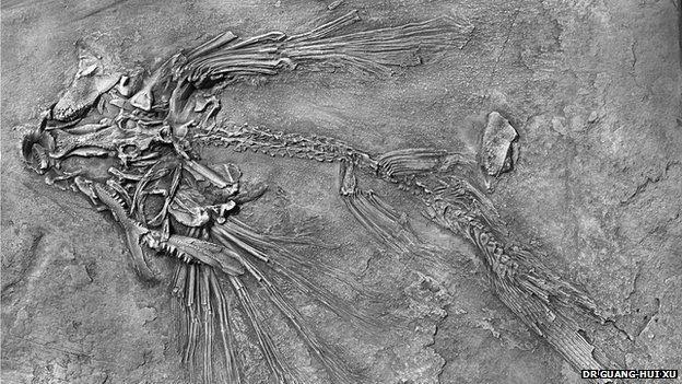 Potanichthys xingyiensis fossil