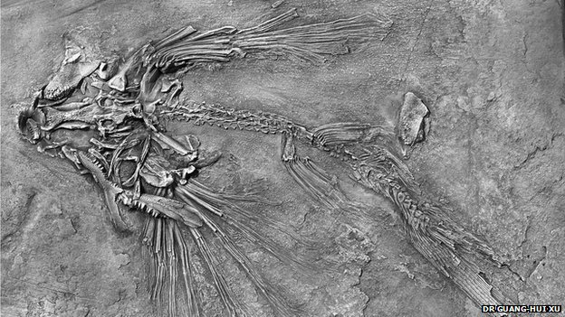 New flying fish fossils discovered in China