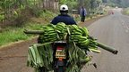 Bananas on the way to market from the Mount Kenya region