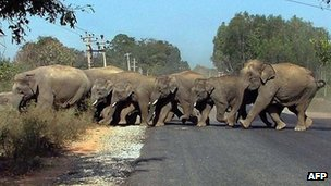 A herd of wild elephants crossing a road in India