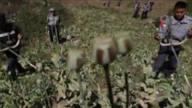 Opium fields in Burma
