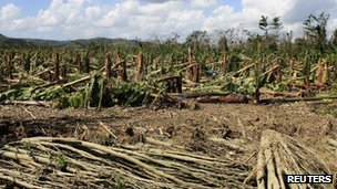 View of a damaged banana plantation in Jamaica - 29 October