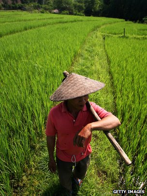 Farmer in a rice field near Luang Prabang