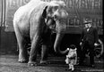 Elephant and little girl