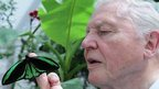 David Attenborough and Priam&#039;s birdwing butterfly