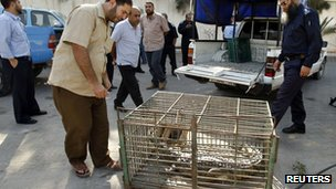 Palestinians look at a crocodile in a cage at a Hamas police station in the northern Gaza Strip
