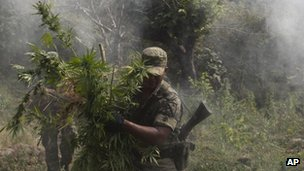 Mexican soldiers burn marijuana plants found in Michoacan - October 2012