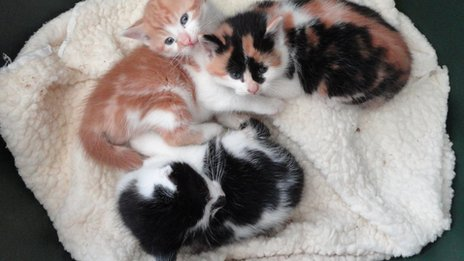 Three kittens on a blanket