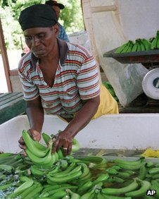 A worker sorts bananas for export at an estate in Jamaica