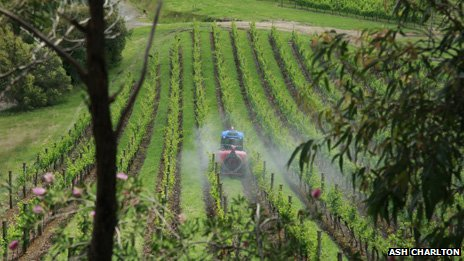 Wine harvesting in Australia's hunter valley
