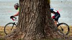 Cyclists race past a tree