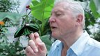 Sir David Attenborough and Priam's birdwing butterfly