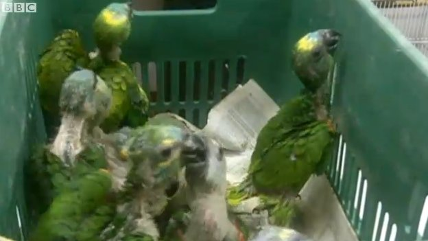 The rescued parrot chicks.