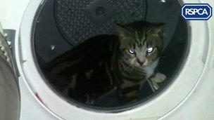 Cat in a tumble dryer
