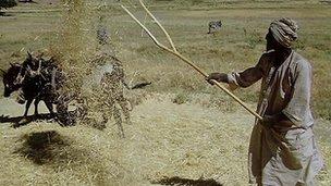Ethiopina farmer