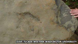 Courtesy of Dave Tucker Western Washington University Geology Department