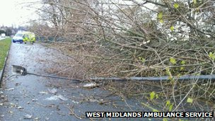 Tree fallen in College Road, Perry Barr