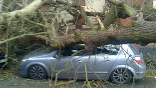 Tree fall in Wolverhampton