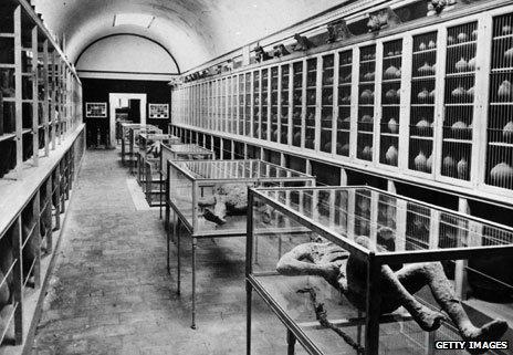 Pompeii Museum in 1866