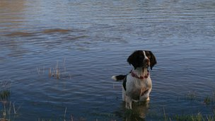 Dog in flood water at Hambeldon Hill. Picture: Kevin Davis