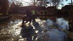 Horses in Colston Bassett