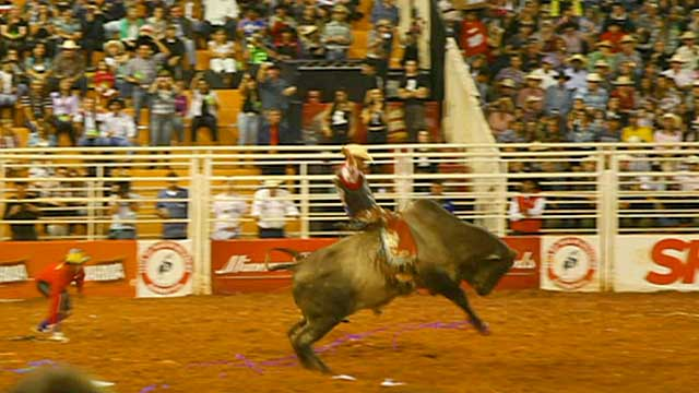 The Barretos rodeo