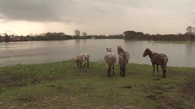 Horses stranded by flood water