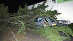 A large tree has crashed on to the windscreen and bonnet of a small hatchback car.
