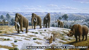 Mammoths during last glacial period