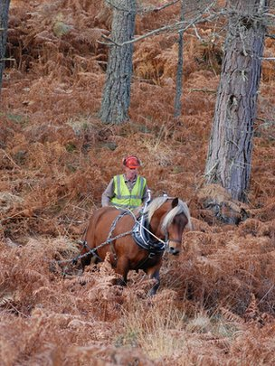 Tarzan the logging horse