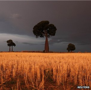 Wheat field, Australia (image: Reuters)