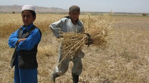 Young boys working in a field in Afghanistan
