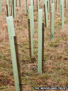 Generic picture of Woodland Trust tree planting