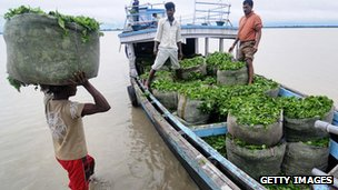 An Indian labourer carries a bag of tea leafs to a motor boat in Guijan village