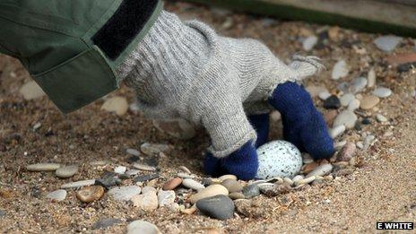George checks the guillemot eggs