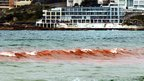 Red algal bloom at Bondi Beach in Sydney