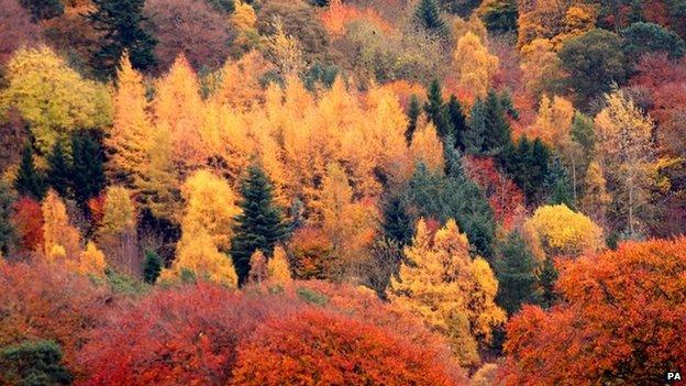 Borders trees