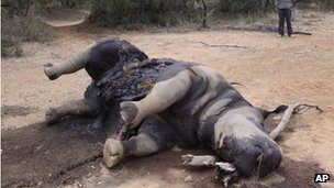 The carcass of a rhino found last month at the Finfoot Lake Reserve north of Johannesburg