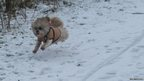 Dog in snow in Ware, Hertofrdshire