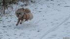 Dog in snow in Ware, Hertofrdshire