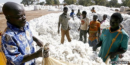 Cotton being sorted in Burkina Faso
