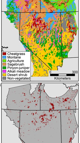 Satellite maps of cheatgrass