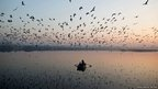 Migratory birds fly above men rowing a boat on the Yamuna river in the old quarters of Delhi 