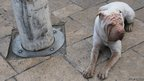 Dog and bollard