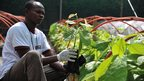 An employee at a cocoa research centre holding a cocoa plant in Abidjan, Ivory Coast - Friday 23 November 2012