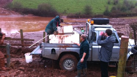 The fish were rescued after being washed into a field from the Grand Western Canal