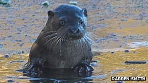 Female otter
