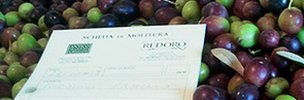 Olives with PDO certificate